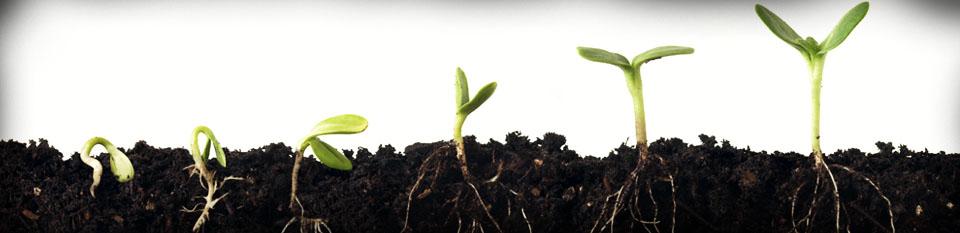Grow 2 header